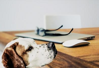 Podatek za posiadanie psa – relikt epoki?